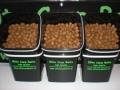 Supernuts-dumbelCIMG2615